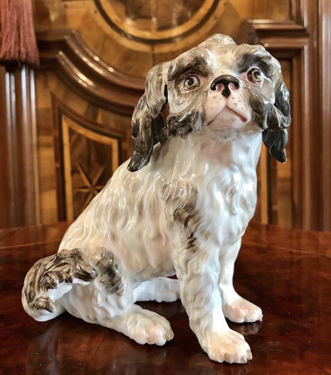 Sitzender Bolongneser Hund
